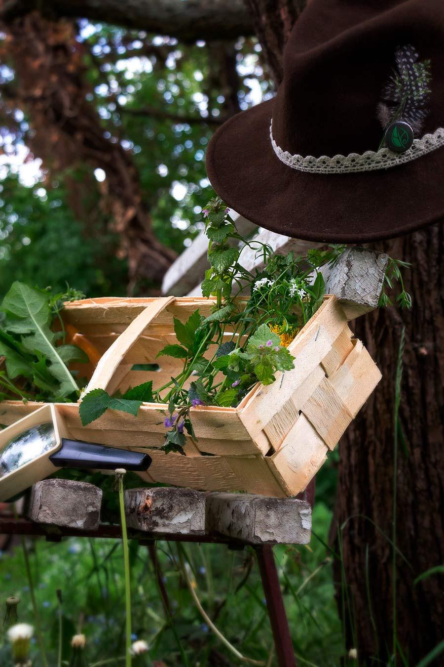 Kräuterblog – Herbal Hunter – und Kräuterwanderungen in Potsdam