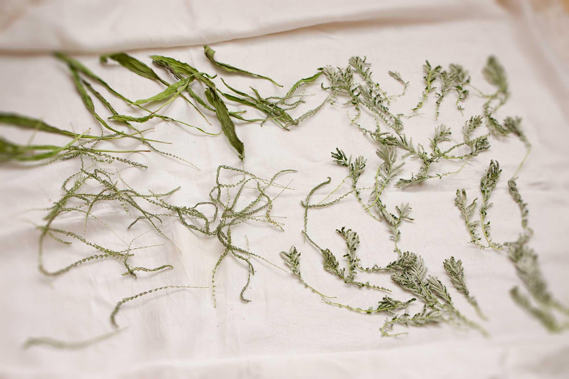 Herbal Hunter – Wildkräuter trocknen