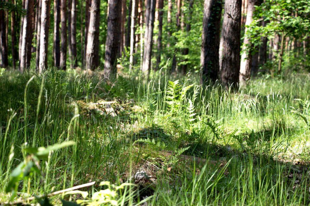 Herbal Hunter auf Wildpark-Tour – Wildpark Potsdam – Wildes Grün