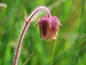 http://www.naturspaziergang.de/Uebersicht_Pflanzen-E-G.htm