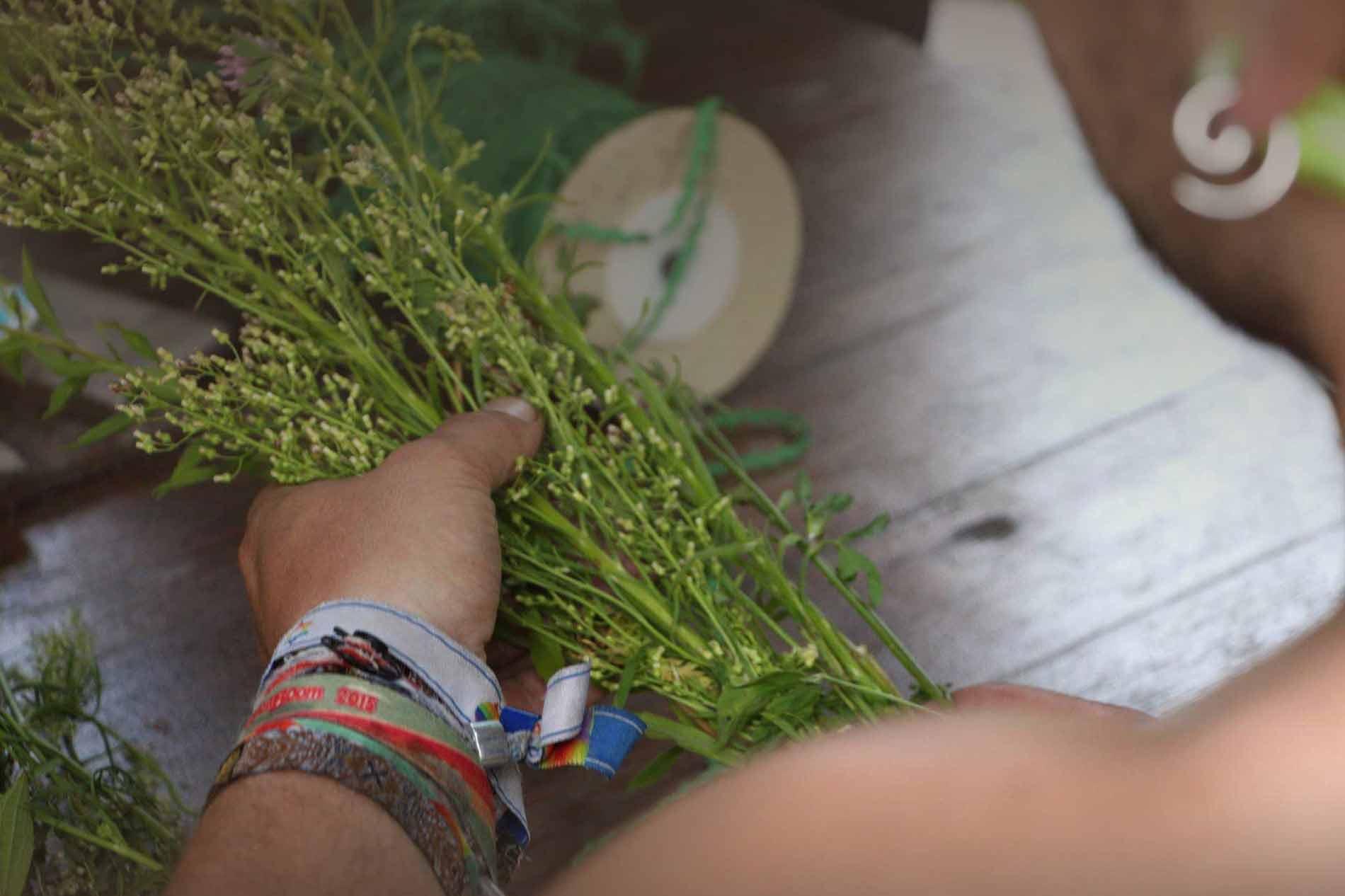 individuelles Kräutererlebnis. Kräuterwanderung oder Workshop mit dem Herbal Hunter. Kräuterblog