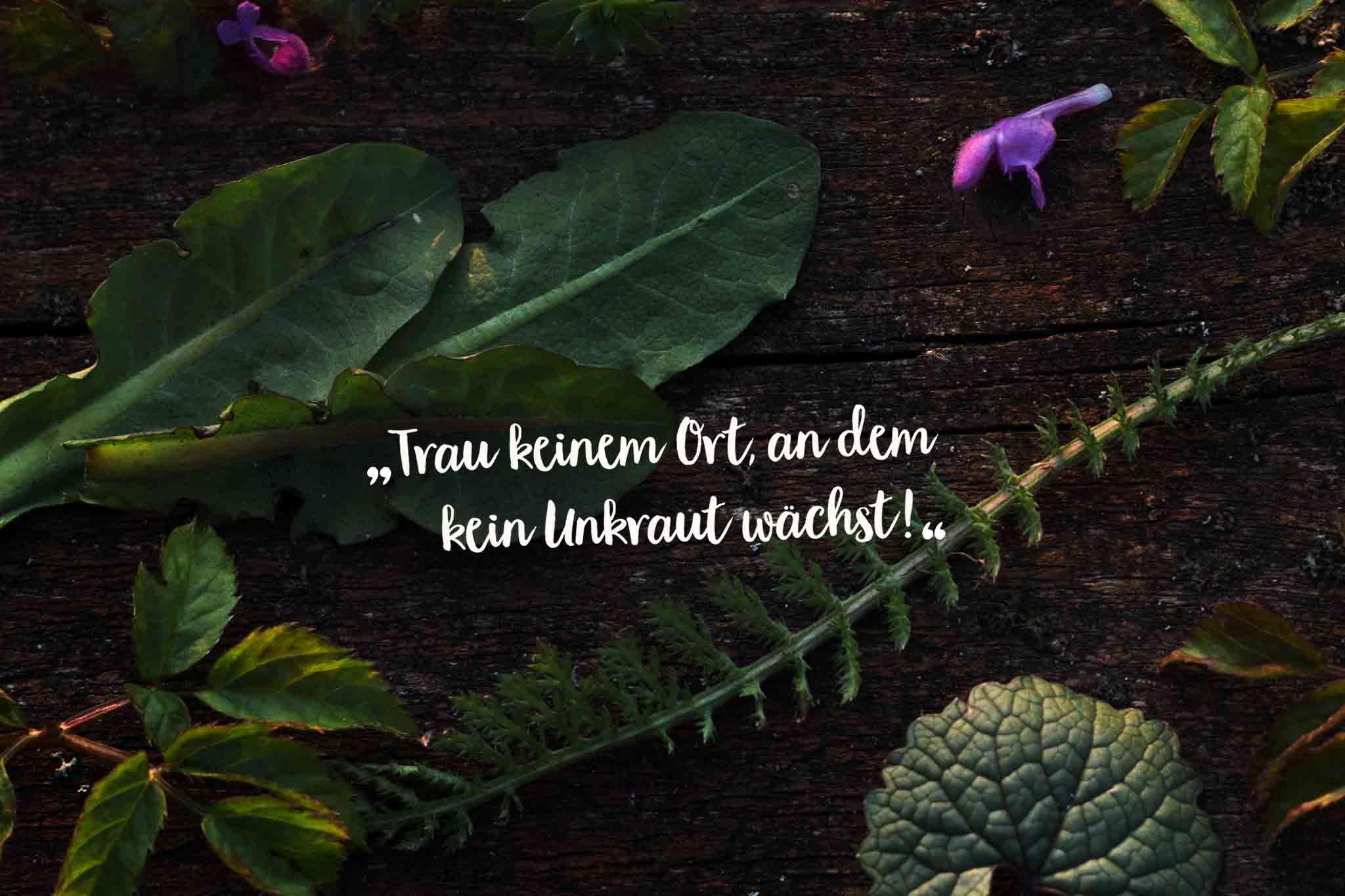 Herbal Hunter - Trau keinem Ort, an dem kein Unkraut wächst – 9 Dinge die dum beim Sammeln von Wildkräutern wissen musst