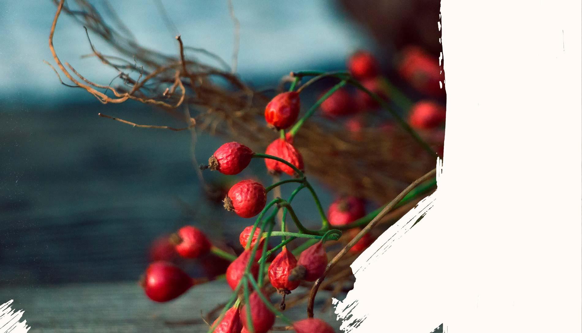 Willkommen in der Herbal Hunter Wildkräuterküche! Eine Auswahl an saisonalen und gesunden Kräuterrezepten mit frischen wildem Grün.