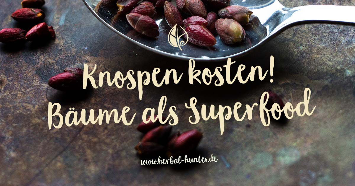 Kräuterblog – Herbal Hunter – Knospen kosten, Bäume als Superfood – Kräuterwanderungen in Potsdam.
