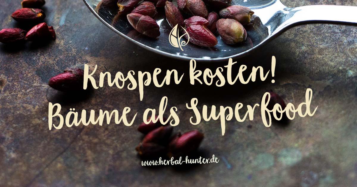 Kräuterblog – Herbal Hunter – Knospen kosten, Bäume als Superfood – Kräuterwanderungen in Potsdam.
