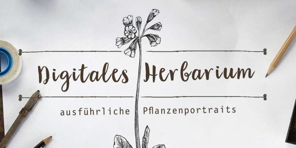 Kräuterblog Herbal Hunter – Digitales Herbarium – Ausfürhliche Wildpflanzenportraits