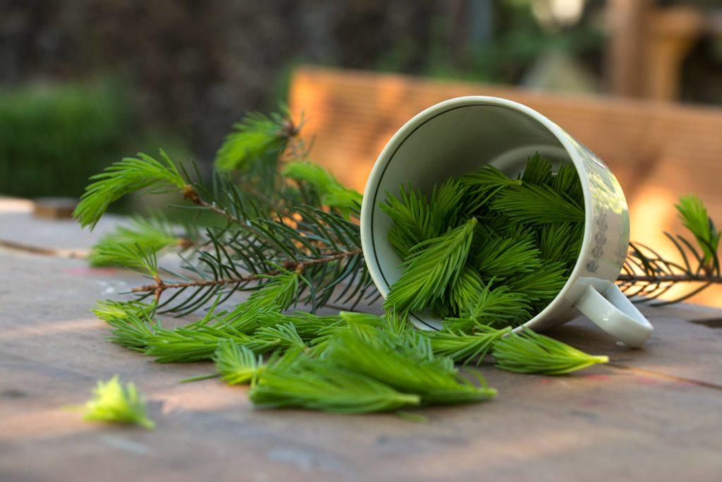 Waldkonfekt aus Fichtenspitzen – Rezept