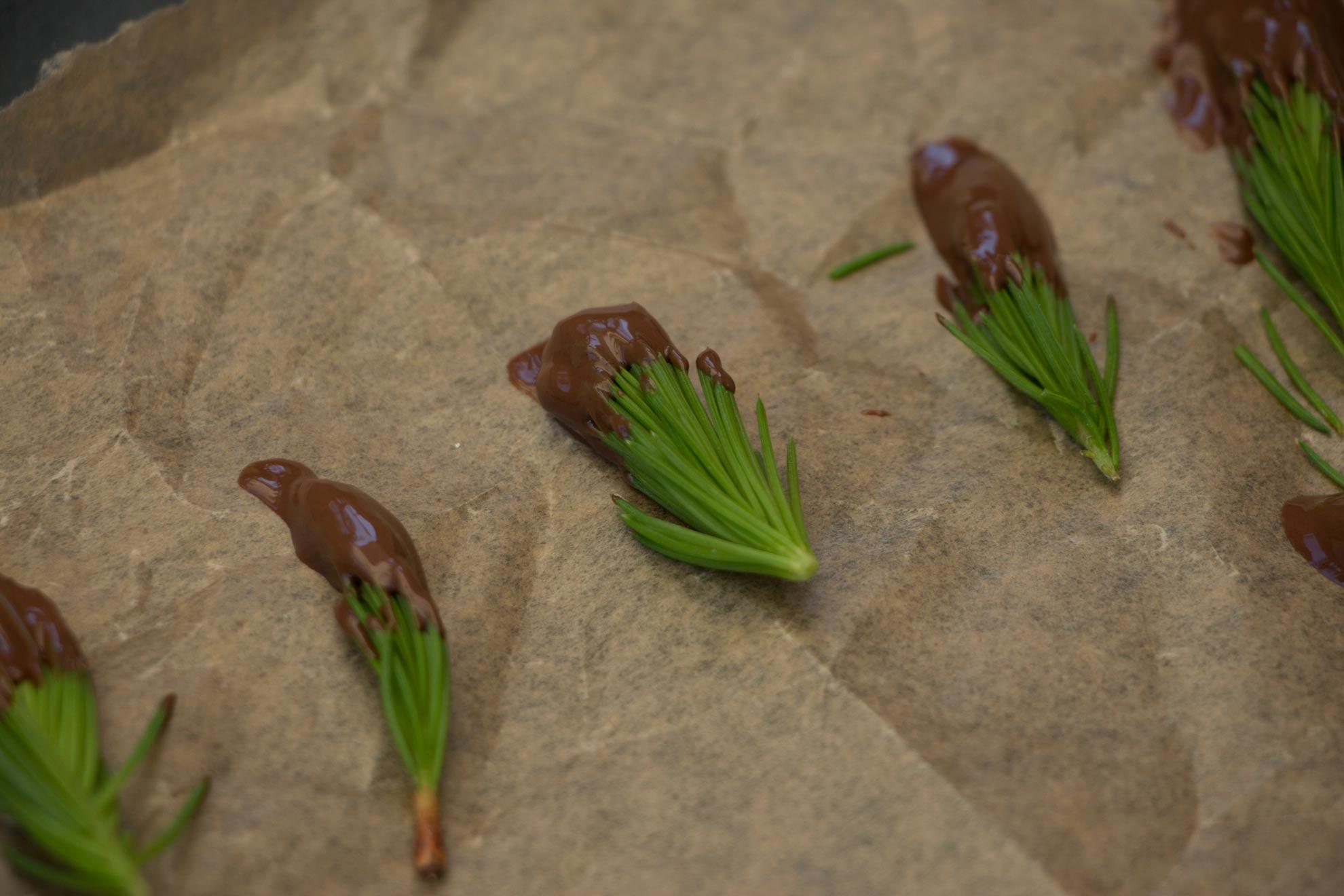 Herbal Hunter. Waldkonfekt aus Fichtenspitzen. saisonale Wildkräuterrezepte