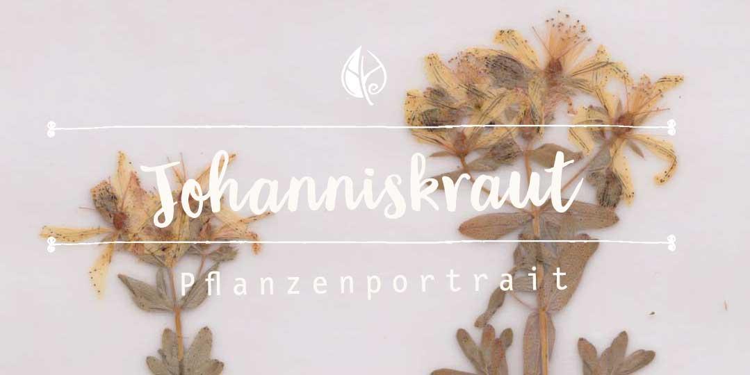 Johanniskraut – Herbal Hunter Digitales Herbarium