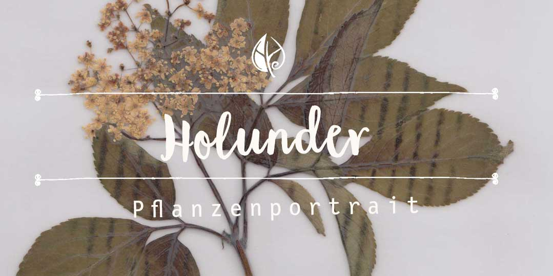 Holunder – Pflanzenpotrait Herbal Hunter Digitales Herbarium