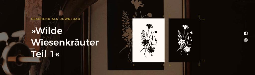 Herbal-Hunter Kräuternewsletter abonnieren und Geschenk erhalten! Kräuter-Illustration »Wilde Wiesenkräuter, Hirtentäschel, Kornblume und Storchenschnabel« – als Download (wie Abbildung)