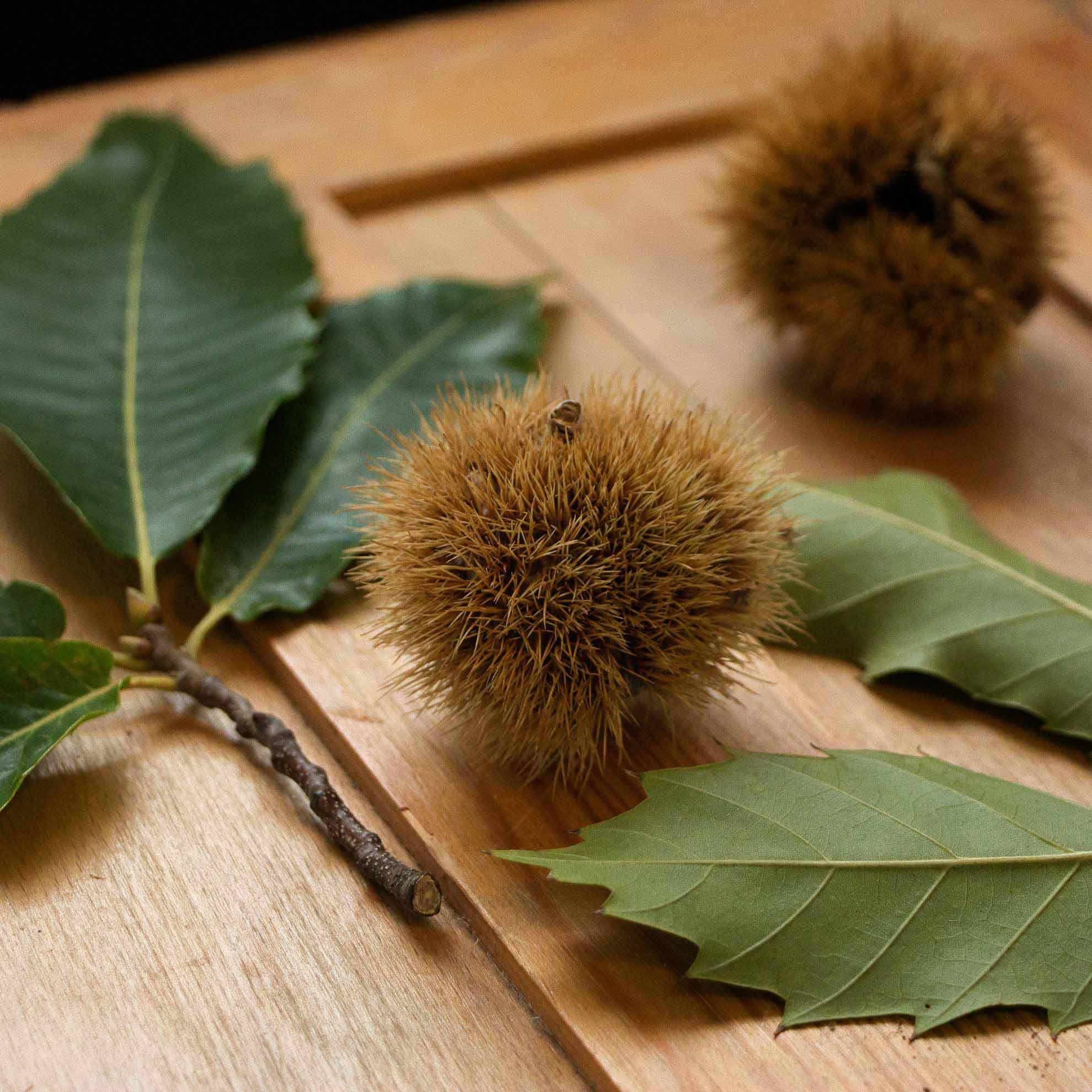 Herbal Hunter – Kräuterwissen. Alles zum Thema Wildkräuter und Heilpflanzen. Lerne Wildkräuter und Heilpflanzen finden, bestimmen und verarbeiten.