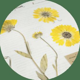 Digitales Herbarium – essbare Pflanzen bestimmen