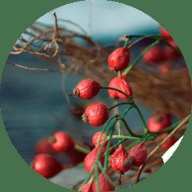 Wildkräuter und Heilpflanzen verarbeiten und essen
