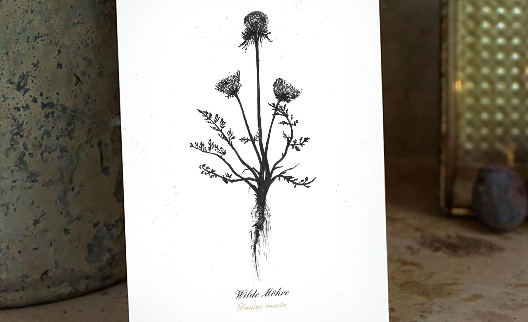 Kräuter-Postkarten als Geschenkidee für KräuterjägerInnen – Unsere selbst gezeichneten Wildpflanzen-Illustrationen sind jetzt als Postkarten-Set erhältlich.
