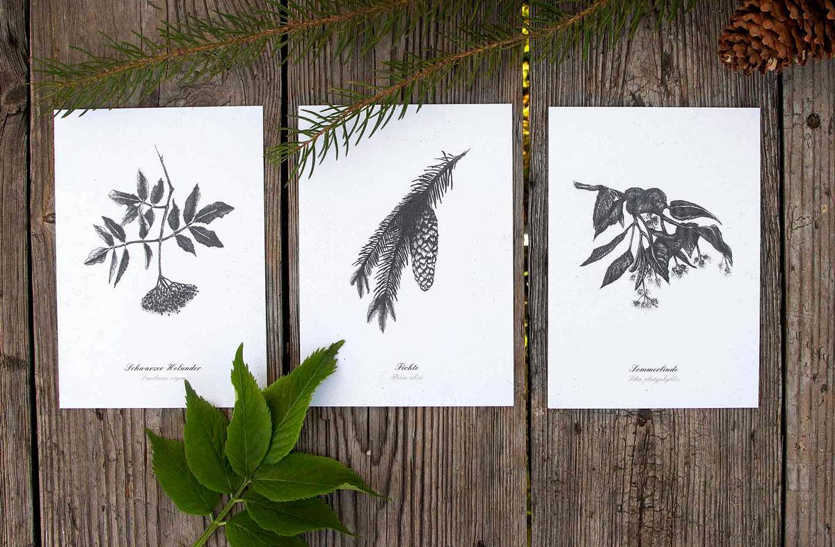 Kräuter-Postkarten – 3er Set essbare Bäume (Holunder, Fichte, Linde)