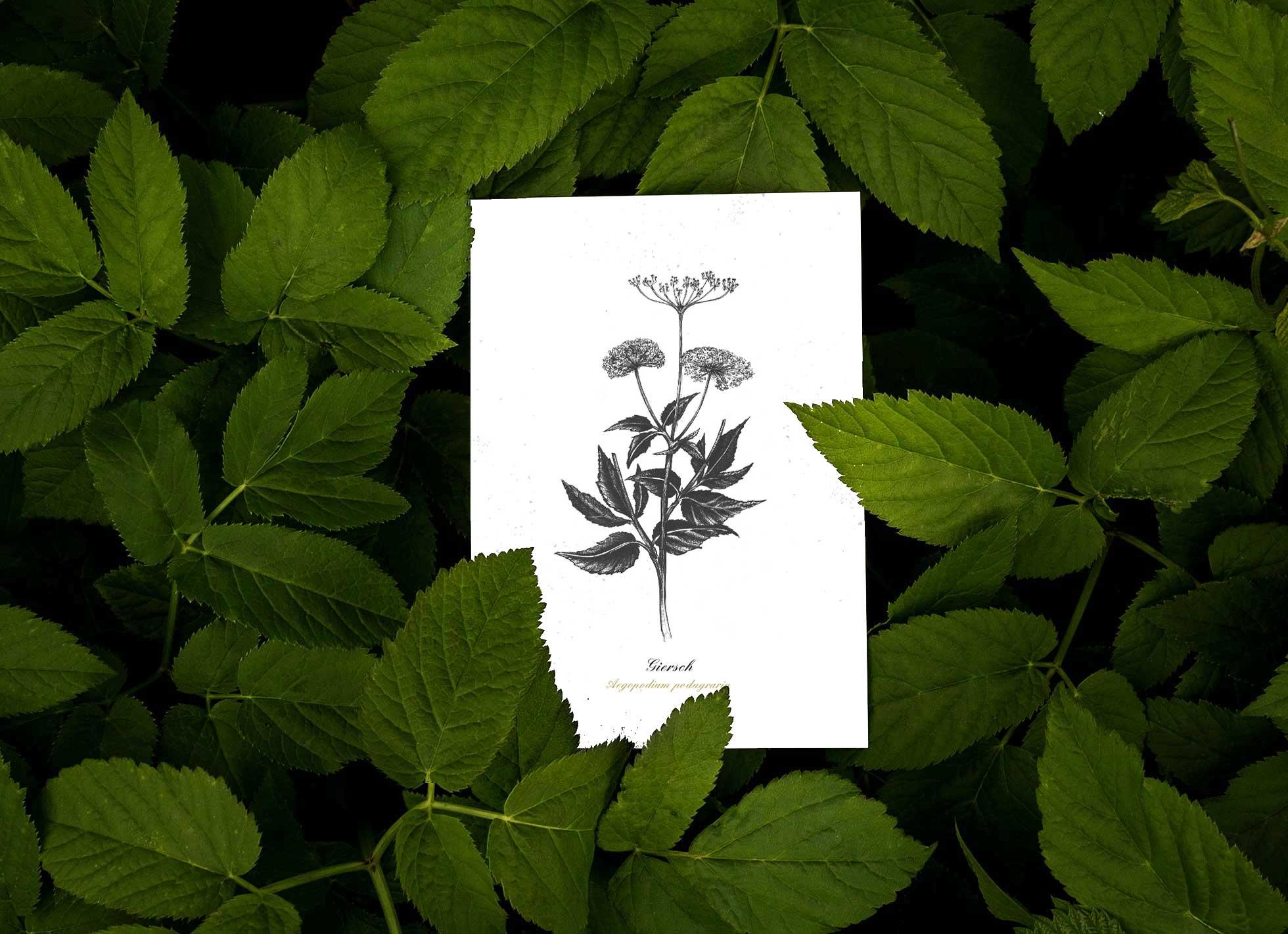 Herbal Hunter – Kräuterpostkarten 3er Set Klassiker der Wildkräuterküche