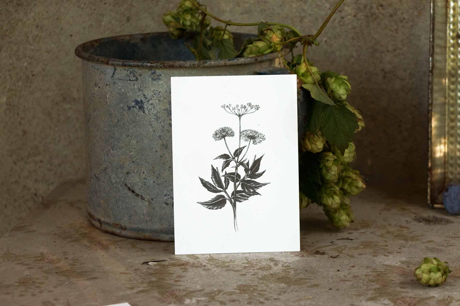 Selbst gezeichnete Kräuter Postkarten vom Herbal Hunter