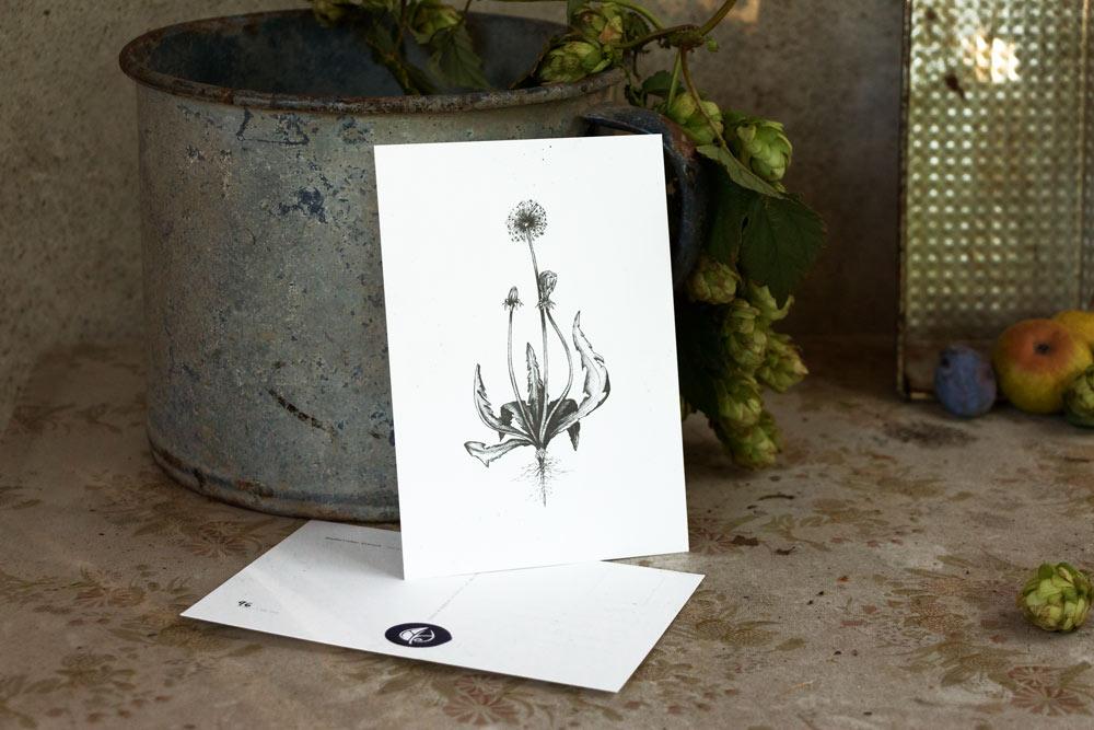 Löwenzahn – Selbst gezeichnete Kräuterpostkarten – Herbal Hunter