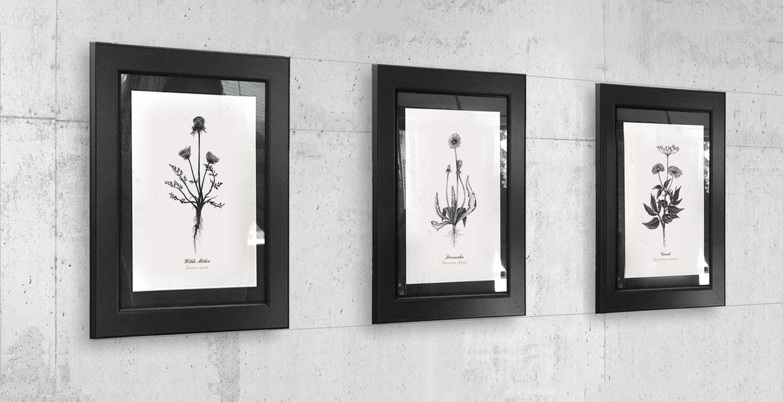 Kräuterpostkarten als Geschenkidee für KräuterjägerInnen – Unsere selbst gezeichneten Wildfplanzen-Illustrationen sind jetzt als Postkarten-Set erhältlich.
