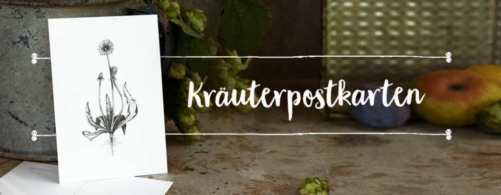 Kräuterpostkarten-Set mit wilden Pflanzen Illustrationen – Herbal Hunter Kräuterblog