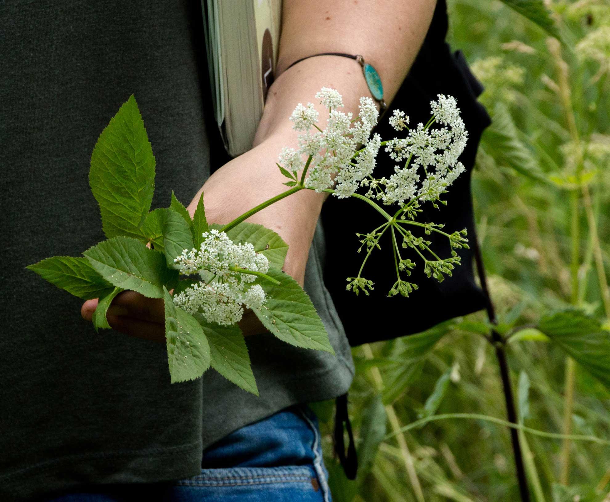 Herbal Hunter – Kräuterblog. Trau keinem Ort an dem kein Unkraut wächst!