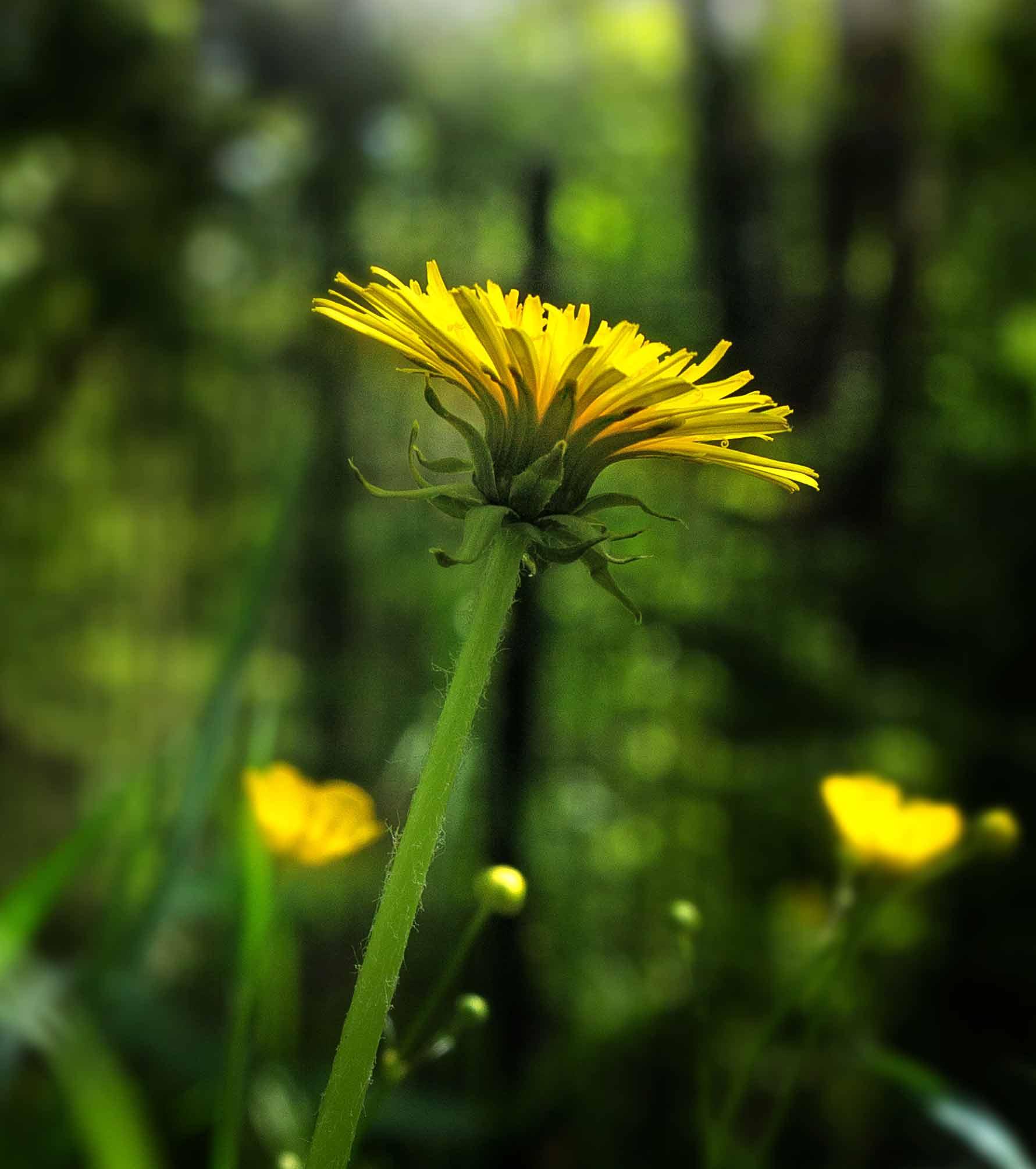 Kräuterblog Herbal Hunter – Essbare Wildpflanzen und Bäume bestimmen, sammeln und verarbeiten. Kräuterwanderungen in Potsdam