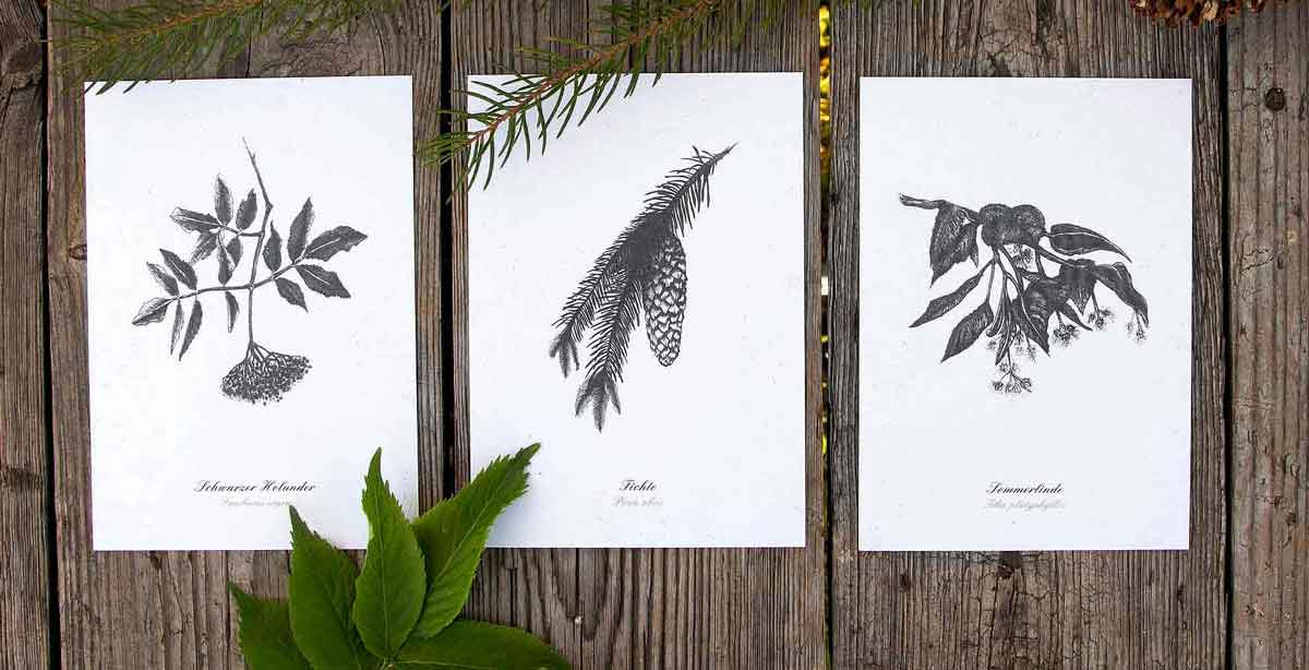 Kräuter-Postkarten-Set essbare Bäume Herbal Hunter
