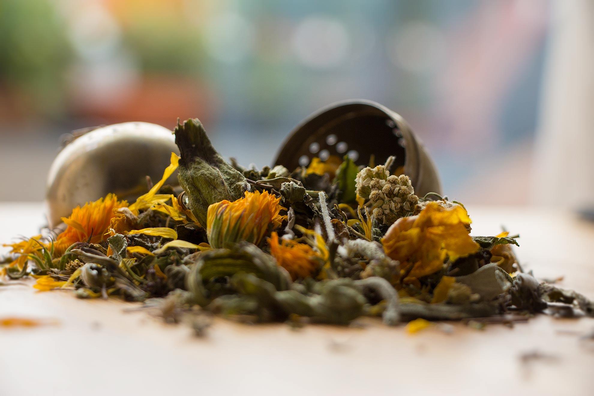 Herbal Hunter Kräuterblog – Wildkräuter und Heilpflanzen trocknen
