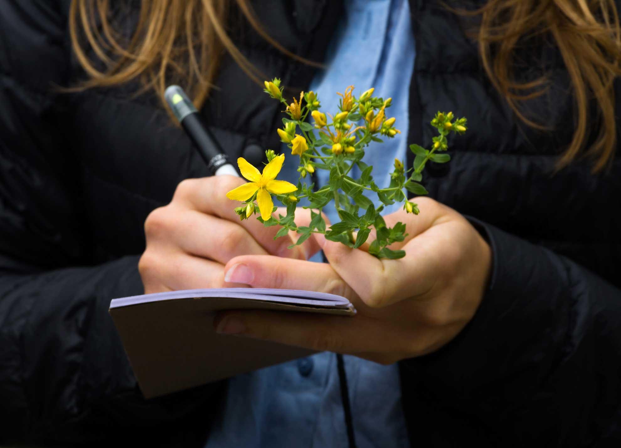 Herbal Hunter Kräuterblog - Kräuterwissen für Einstieger und Fortgeschrittene